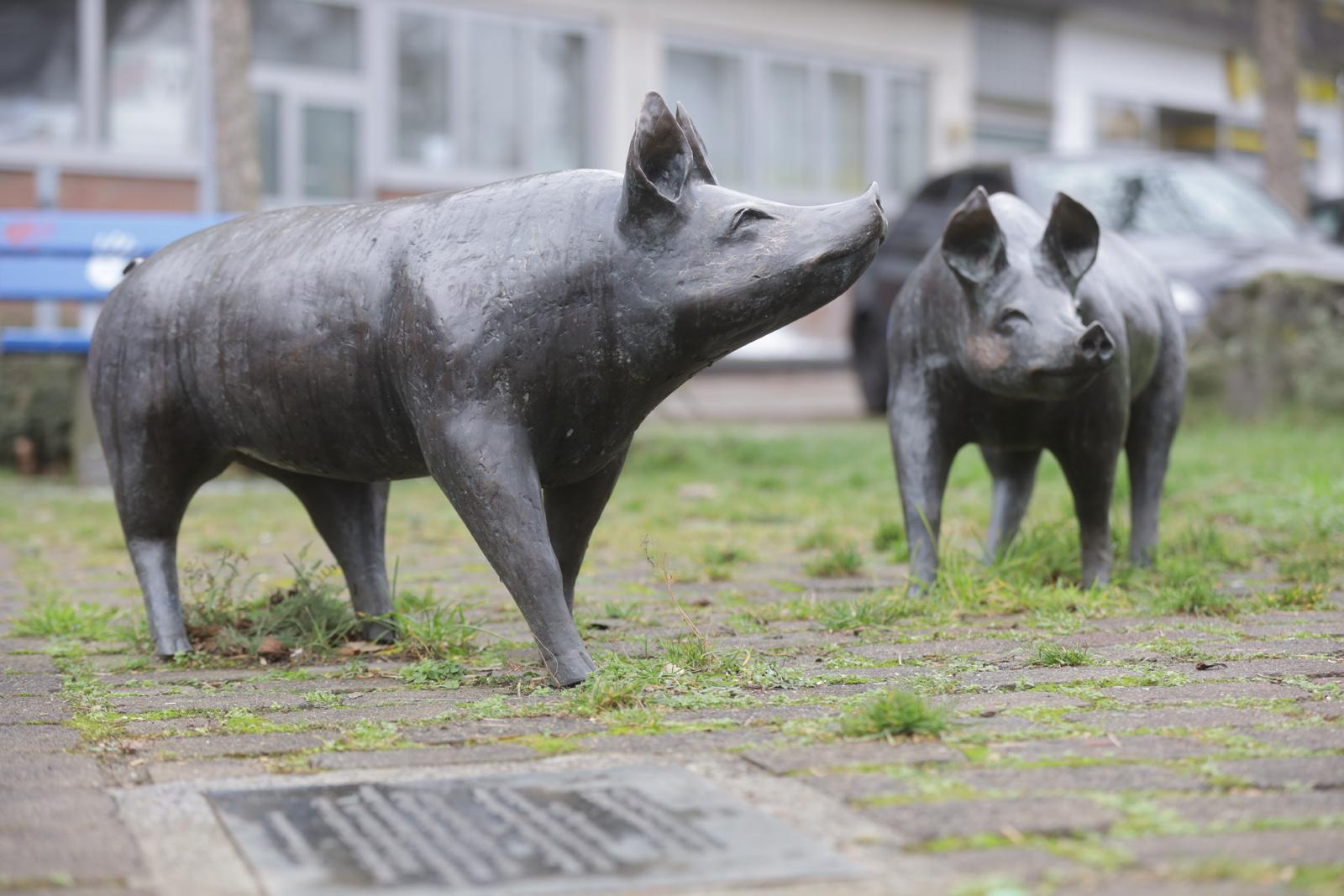 Schweine | Leverkusen-Bürrig